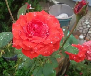 chuva, Conceitual, and flor image