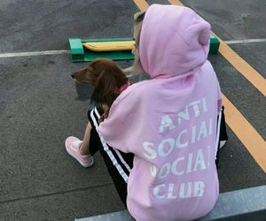 aesthetic, adidas, and dog image