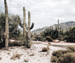 cactus, travel, and nature image