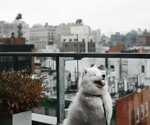 adventure, animal, and dog image