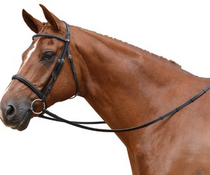 snaffle bridle and cavesson bridle image