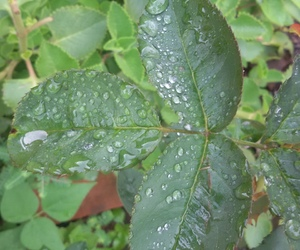 beauty, drops, and folhas image