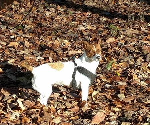 jack russell and jack russell life image