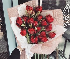 flowers, red, and rouge image