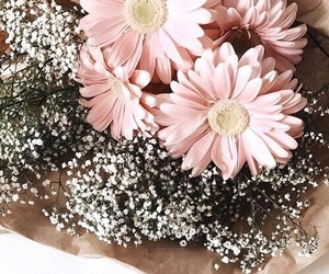 flowers, pinkflowers, and pink image