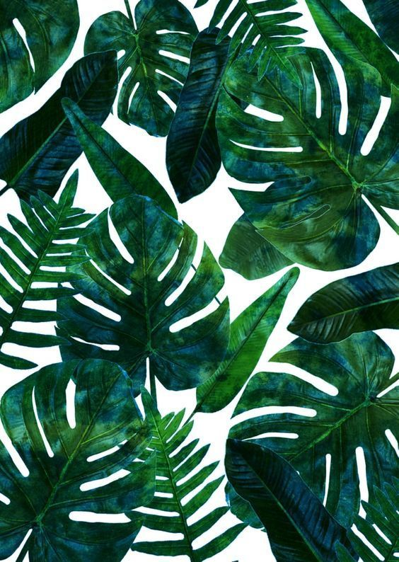 Tropical Green Leaves Uploaded By Lucian On We Heart It
