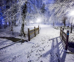 beauty, cold, and december image