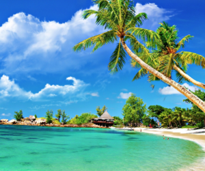 beaches, palm trees, and beach lovers image