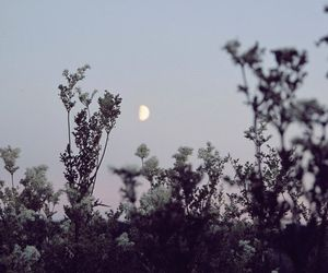 flowers, moon, and night image