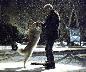 dog, hachiko, and movie image