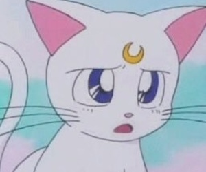 sailor moon, cat, and anime image