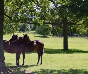 foaling services, eis investment, and bloodstock services image