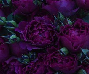 deep purple and flowers image