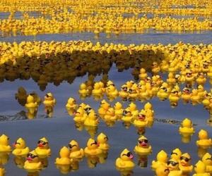 duck, yellow, and lake image