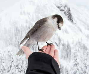 animal, snow, and bird image