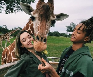 giraffe, animal, and couple image