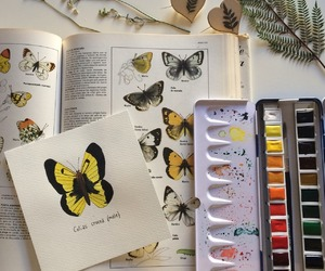 aesthetic and butterfly image