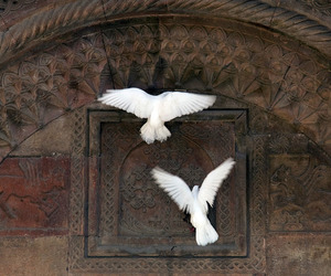 bird, animal, and fly image