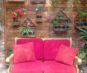 plants, red, and sofa image