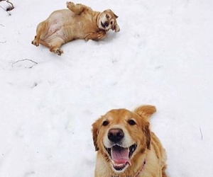 dogs and snow image