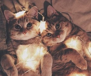 animals, cats, and light image