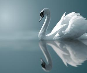 aesthetic, animal, and beautiful image