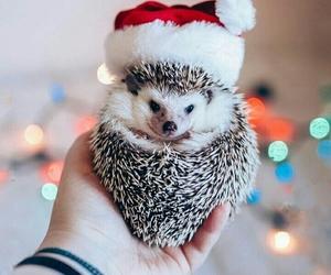 cute, christmas, and hedgehog image