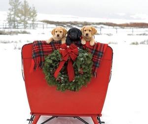 christmas, animal, and dog image