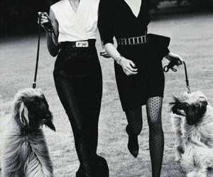 fashion, dog, and model image