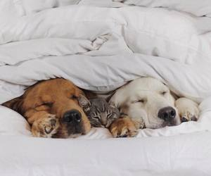 adorable, puppies, and winter image