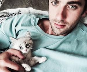 adopt, animals, and cat image