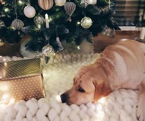 christmas, cozy, and dog image