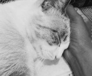 animals, cat, and gato image