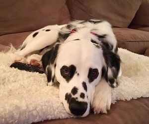 dog, cute, and hearts image