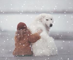 animal, christmas, and edit image