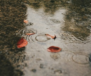 rain, fall, and leaves image