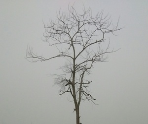 branches, foggy, and dried leaves image