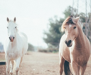 animals, horses, and lovely image