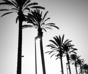 beach, black, and dark image