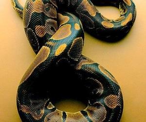 snake, animal, and yellow image