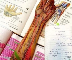 medicine, anatomy, and medicina image