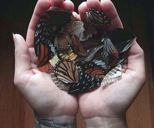butterfly, grunge, and hands image