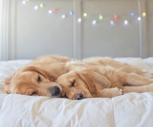 christmas lights and dogs image