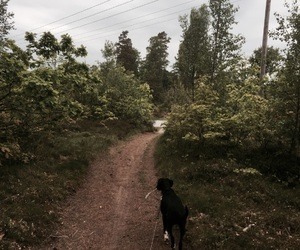 dog, woods, and powerlines image