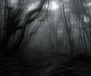 black, scary, and woods image