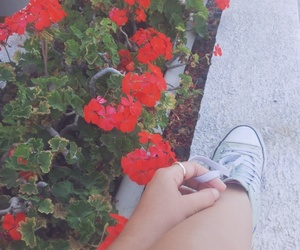 converse, flowers, and outside image