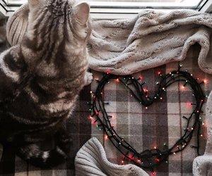 cat, light, and winter image