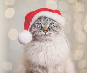 cat, christmas, and holidays image