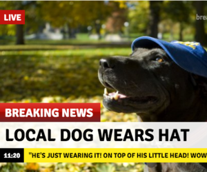 dog, news, and breaking news image
