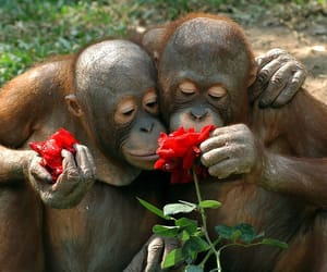 apes, flowers, and monkey image